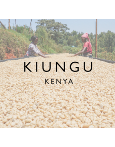 Kiungu Ab, Kenya - Wood St Coffee