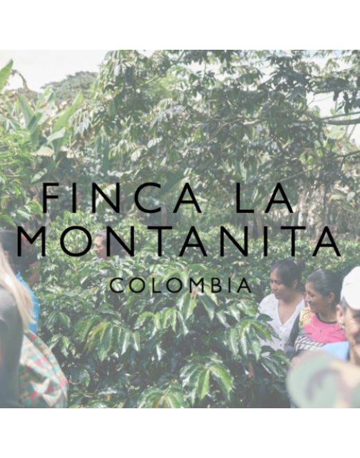Finca la Montanita, Colombia - Wood St Coffee