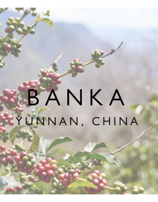 Banka, China - Wood St Coffee